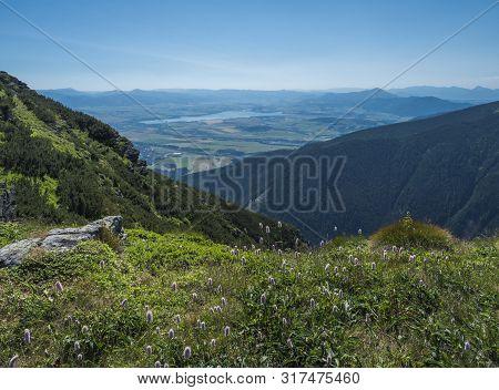 View On Valley Of Liptovsky Mikulas With Liptovska Mara Lake From Meadow With Blooming Pink Plantago