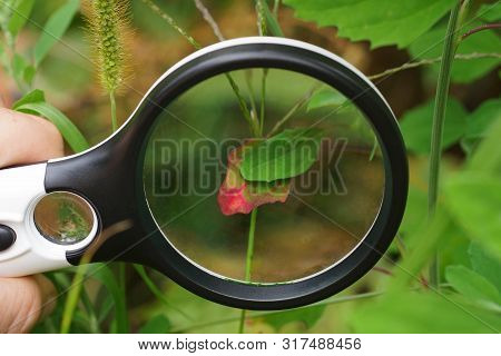 Black Round Magnifier Over A Green Red Leaf Of A Plant In Nature