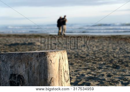 A Couple Of Beachgoers In Westport With A Piece Of Driftwood In Foreground, Highlighted By Sunset