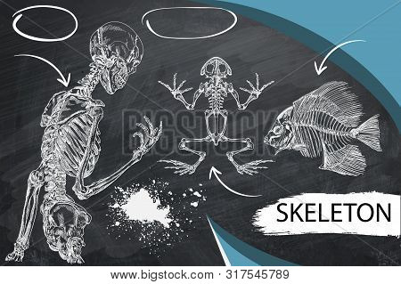 Human Skeleton, Fish And Frog Skeleton Human Skeleton Posing Isolated Over White Background Vector I