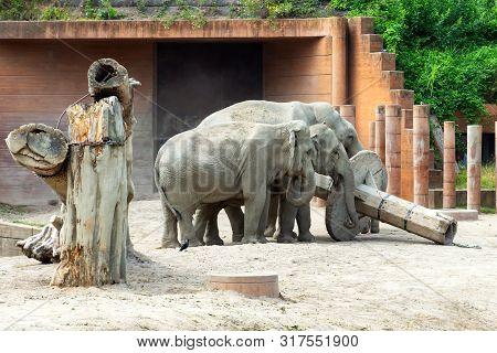Beautiful Elephants In The Zoo. Animal Copenhagen Zoo.