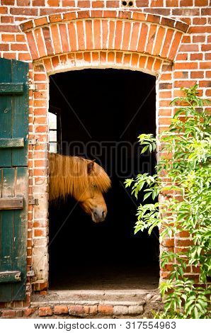 A Horse Looks Out Of It`s Stable. The Building Is Of Red Old Bricks With Green Window Shutters