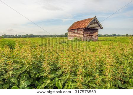 Small Wooden Shed With Orange Roof Tiles In A Meadow. In The Foreground Are Many Flowering Stinging