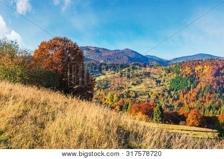 Mountain Countryside In Evening Light.  Beautiful Autumn Scenery. Trees In Fall Foliage. Dry Sunny W
