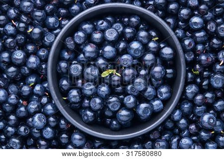 Freshly picked organic blueberries. Full Frame Shot Of Fresh Blueberry Fruits.