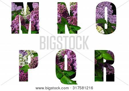 Letters M N O P Q R Of Beautiful Flowers And Branches Of Orchids