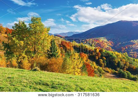 Wonderful Autumn Scenery In Mountains. Trees In Fall Colorful Foliage On The Grassy Meadow And Hills