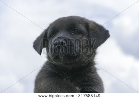 Black Puppy On Sky Background. Cute Little Puppy On A Light Background
