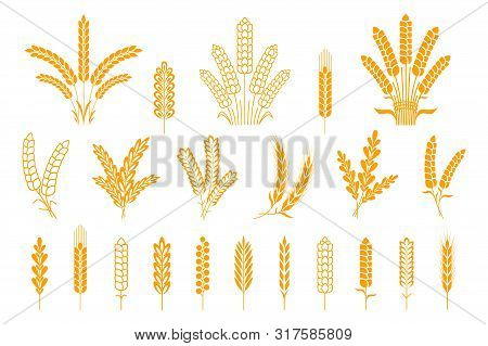 Wheat And Rye Ears. Oats Barley Rice Spikes And Grains, Heraldic Elements For Beer And Bread Logo. V