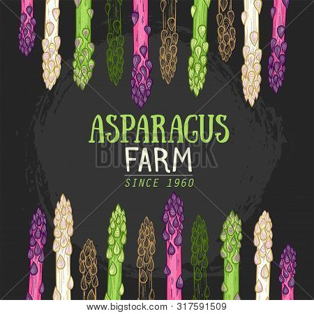 Organic Asparagus Farm Hand Drawn Vector Illustration. White, Green And Purple Asparagus Sprouts On
