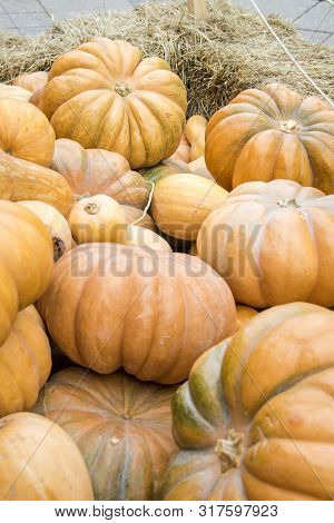 Many Pumpkins On Hay At The Farmers Market. Thanksgiving Day And Harvesting Concept.