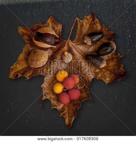 Decorative Display With Buckeye Seeds, Acorns, And  Arbutus Unedo, The Strawberry Tree Fruit, On Big
