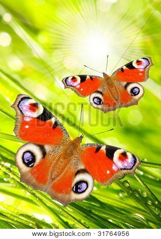 Early morning in a spring grass and a butterflies, natural background. Sunny day concept. poster