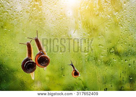 Family Snails Crawling Wet Glass Against Blurred Green Trees. Concept Family, Parenthood Childhood C