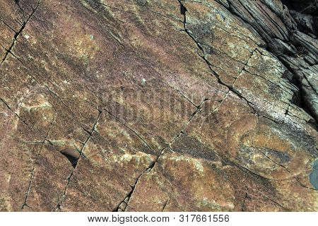 Ancient Fossils In Rocks At Mistaken Point Ecological Reserve, Newfoundland