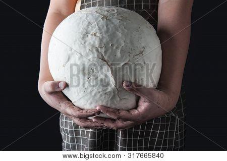 Giant White Puffball Mushroom On The Hand Farmer