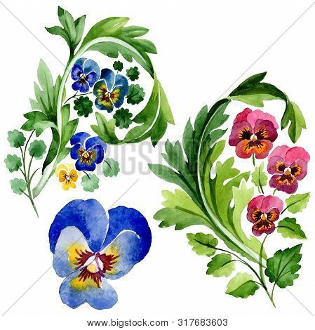 Ornament With Viola Floral Botanical Flowers. Watercolor Background Set. Isolated Violas Illustratio