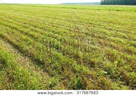 Summer. Beveled Yellow Wheat Field. The Beveled Rye Field. Field After Harvest