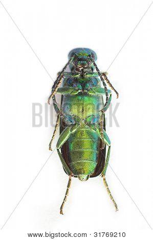 metallic bug isolated on white