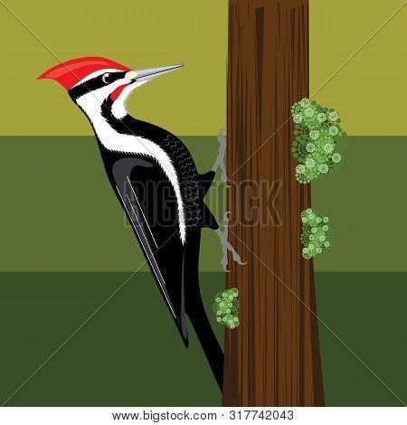Woodpecker Bird Illustration Clever Bird Nature Clip-art