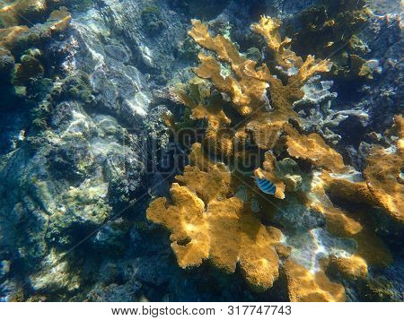 Corals are marine invertebrates within the class Anthozoa of the phylum Cnidaria. They typically live in compact colonies of many identical individual polyps. poster