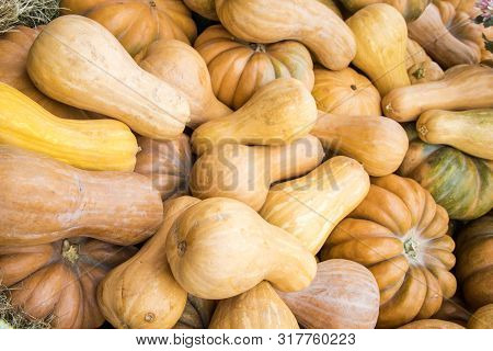 Background Filled With Different Pumpkins. Autumn Outdoor Decoration.
