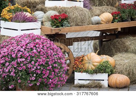 Some Pumpkins With Hay And Flowers On Old Cart For Autumn Decoration At Market Place.landscape Desig