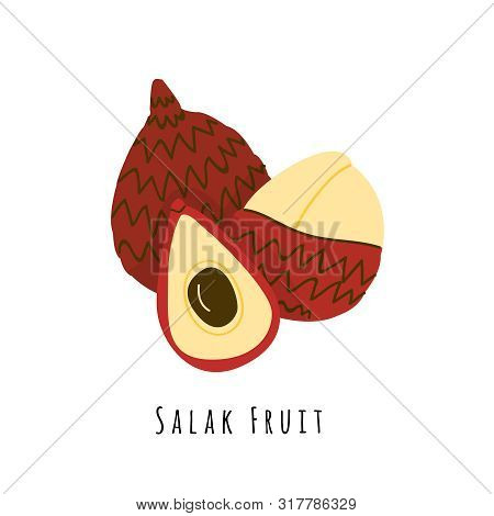 Salak Fruit Flat Vector Illustration. Cartoon Slices Of Exotic, Tropical Fresh Fruit. Clipart With T