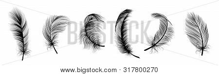 Black Fluffy Feather. Hand Drawing Vintage Art Realistic Quill Feathers For Pen Detailed Isolated Ve