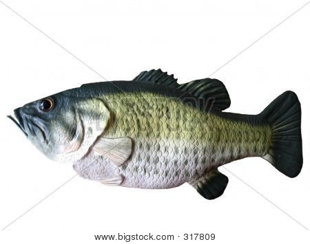 Bigmouthed Bass
