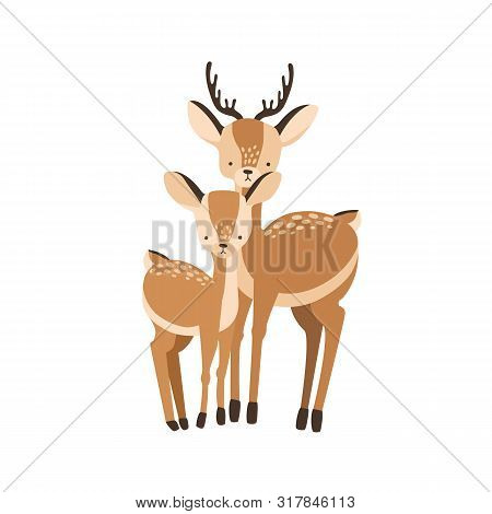 Deer With Fawn Isolated On White Background. Family Of Wild Forest Herbivorous Animals. Chital Paren
