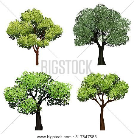 Trees Realistic. Nature Garden Botanical Collection Trees With Green Leaves Vector Illustrations. Br