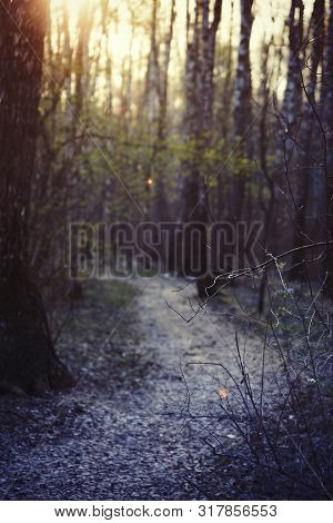 Photo Of A Blurry Evening Mystical Forest. Lonely Track Goes Into The Distance. Magical Mystical Sto