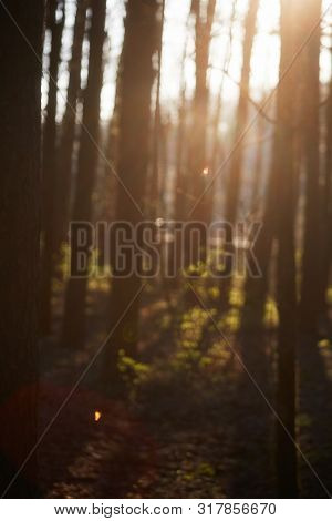 Photo Of Blurred Forest Tree And Green Foliage In Warm Sunlight.