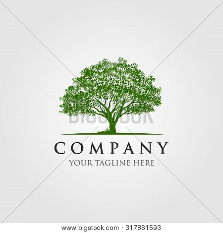 Willow Tree Oak Forest  Logo Illustration Design