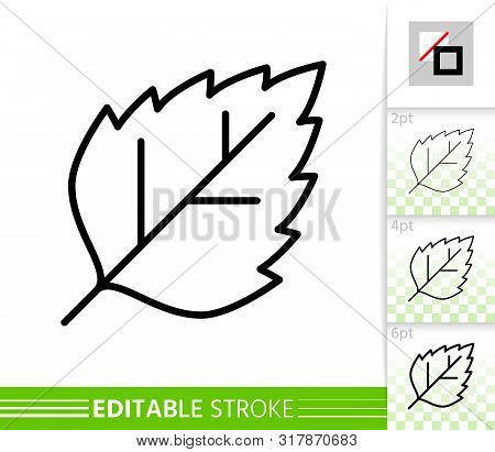 Leaf Birch Or Poplar Thin Line Icon. Nature Banner, Flat Style. Botanical Poster. Linear Pictogram.