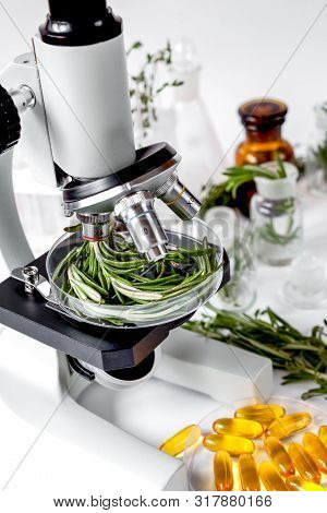 Food Quality Control In The Laboratory Rosemary
