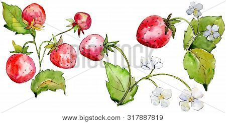 Strawberry Healthy Food In A Watercolor Style Isolated. Watercolour Background Set. Isolated Berry I