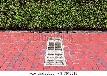 lattice of the drainage system hatch on the pedestrian sidewalk made of tiles along the hedge of thuja bushes on a sunny day. poster