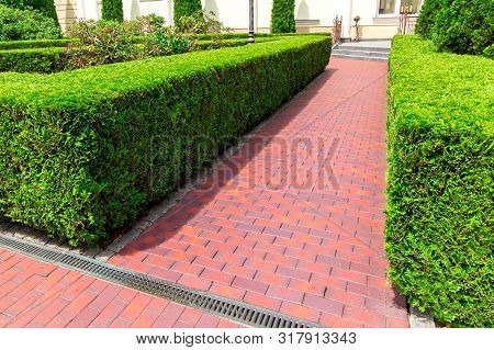 pedestrian footpath made of red tiles with a drainage grid and a evergreen hedge of thuja bushes. poster