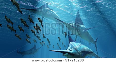 Blue Marlin Hunting 3d Illustration - A Pack Of Indo-pacific Blue Marlin Predatory Fish Hunt A Schoo