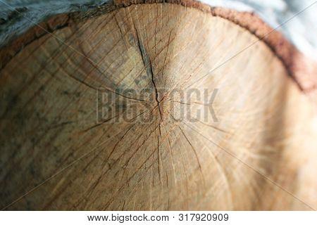 Oak Wood Close Up High Quality Stock Photo