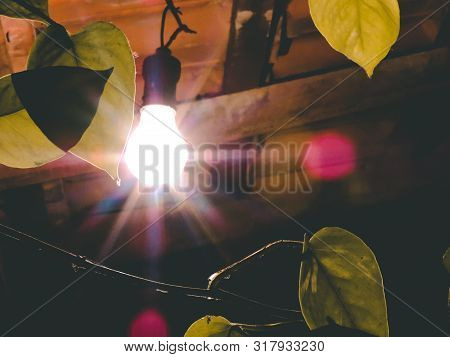 Leaves As A Backlight With A Wood Frame