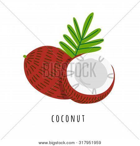 Coconut Fruit Flat Vector Illustration. Cartoon Slices Of Tropical Fresh Fruit. Cocos Creative Clipa