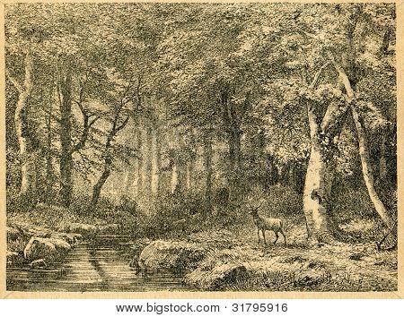 Bokskogen - gammal illustration av okänd konstnär från Botanika Szkolna na Klasy Nizsze, författare Joze