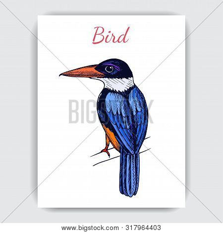 Sketch Hand Drawn Card With Kingfisher. Animals Illustration Birds.