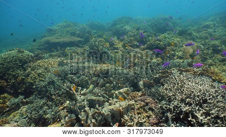 Coral Reef Underwater With Fishes And Marine Life. Coral Reef And Tropical Fish. Camiguin, Philippin