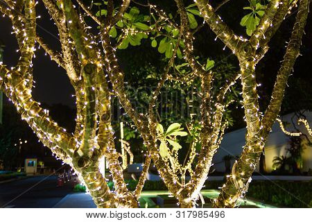 Decorative Outdoor String Lights Hanging On Tree In The Garden At Night Time Festivals Season - Deco