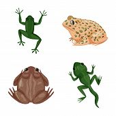 Vector illustration of frog and anuran logo. Set of frog and animal stock symbol for web. poster