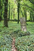 headstone on the old cemetery for insane people with growth of ivy in Prague, Czech Republic poster